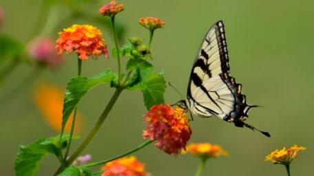 Las enseñanzas de las flores –  Reflexión